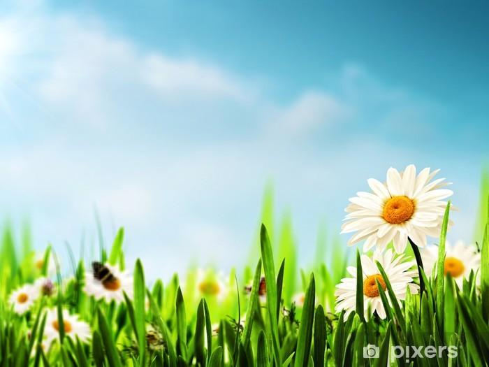 Vinyl Fotobehang Daisy bloemen op de weide, seizoensgebonden achtergronden voor je desi - Seizoenen