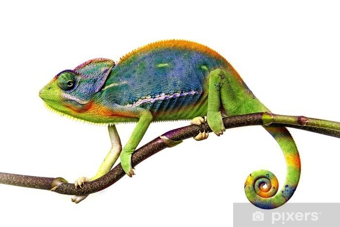 Fototapeta winylowa Kameleon - iStaging
