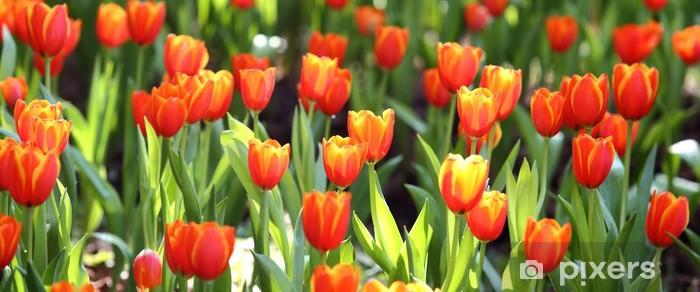 Vinilo Pixerstick Tulipán de color en el fondo de la naturaleza - Temas