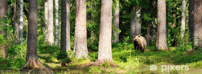 Vinyl Fotobehang Bruine beer in het bos panorama - Thema's