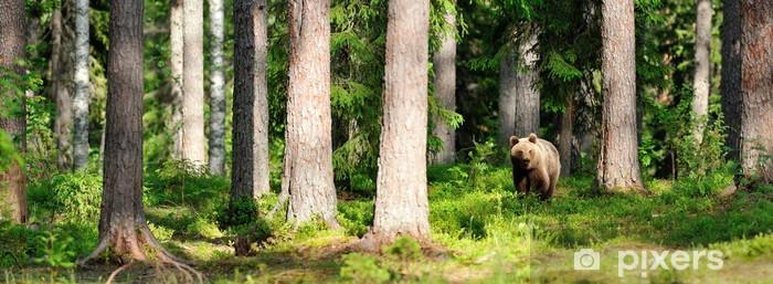 Sticker Pixerstick L'ours brun dans la forêt panorama - Thèmes