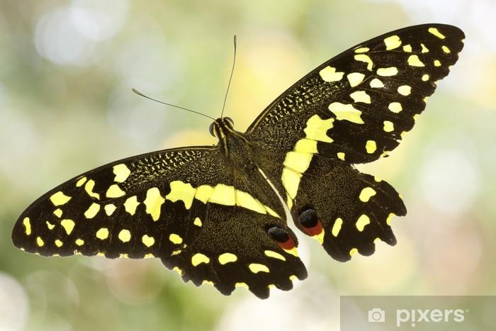 Papier peint vinyle Papillon, ailes déployées - Thèmes