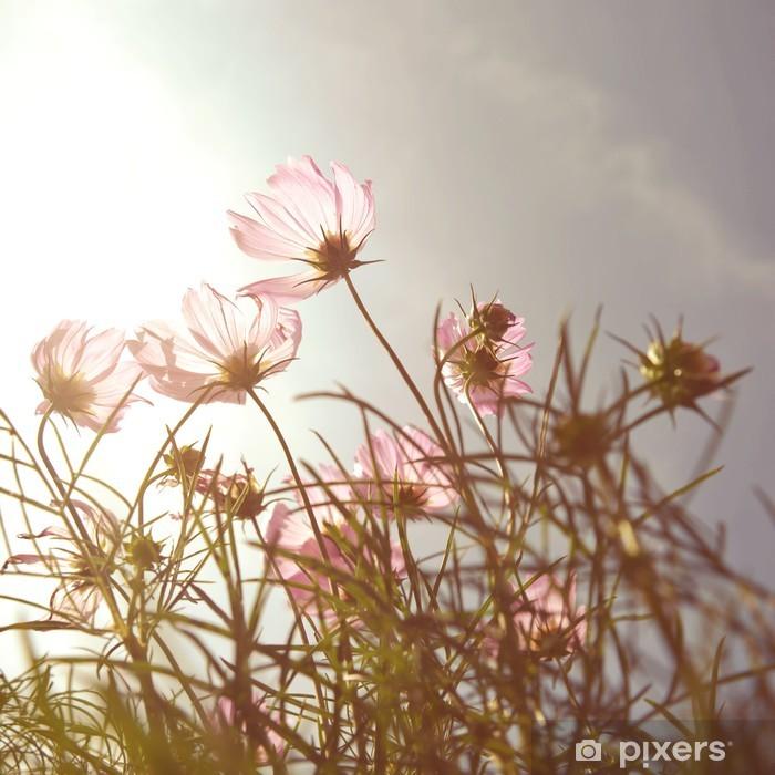 Fototapeta samoprzylepna Zabytkowe kosmos kwiaty w czasie zachodu słońca - Style