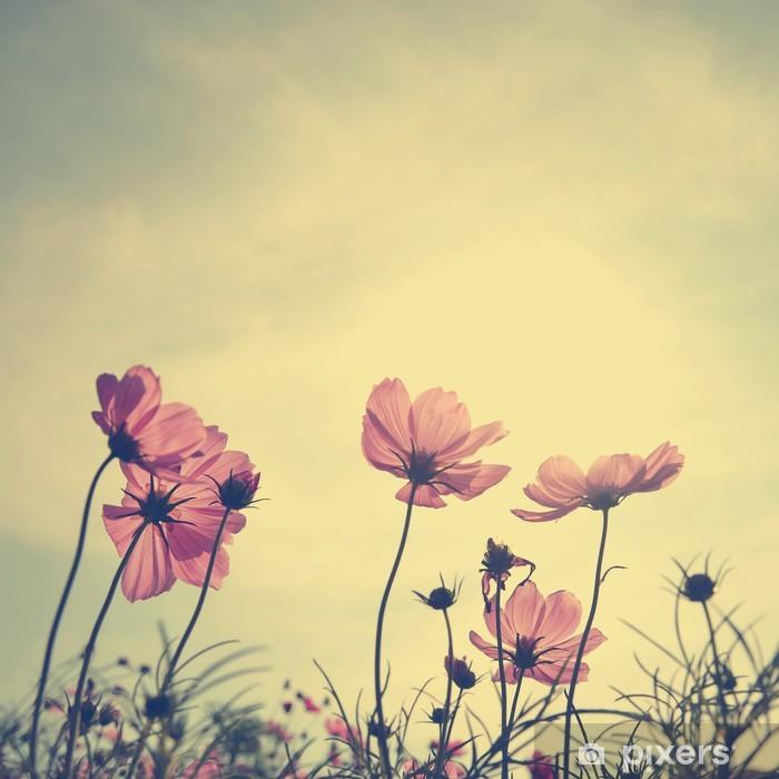 Vinil Duvar Resmi Gün batımı zamanında Vintage Cosmos çiçekler -
