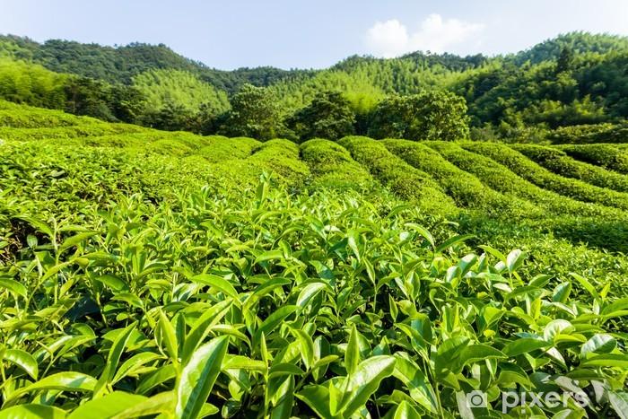 Papier peint vinyle Vert jardin de thé sur la colline, sud de la Chine - Asie