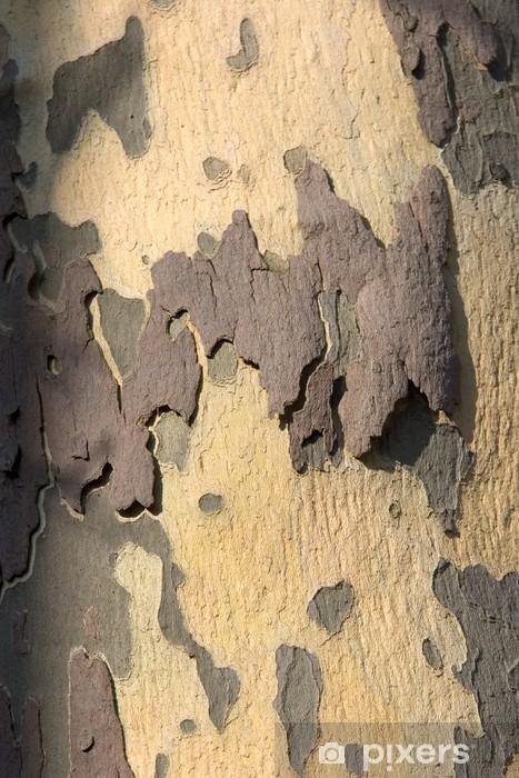 Naklejka Pixerstick Kora jawor - Drzewa