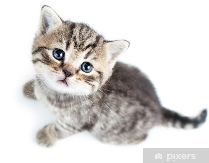 Aufkleber Draufsicht Auf Baby Katze Kätzchen Auf Weißem Hintergrund Pixerstick