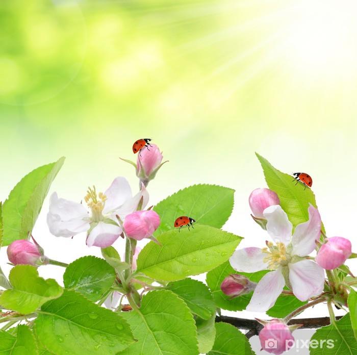Vinylová fototapeta Jarní květy jabloně s berušky - Vinylová fototapeta