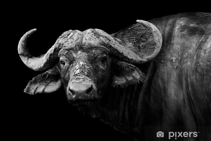 Fototapeta winylowa Buffalo w czerni i bieli - Eklektyczny
