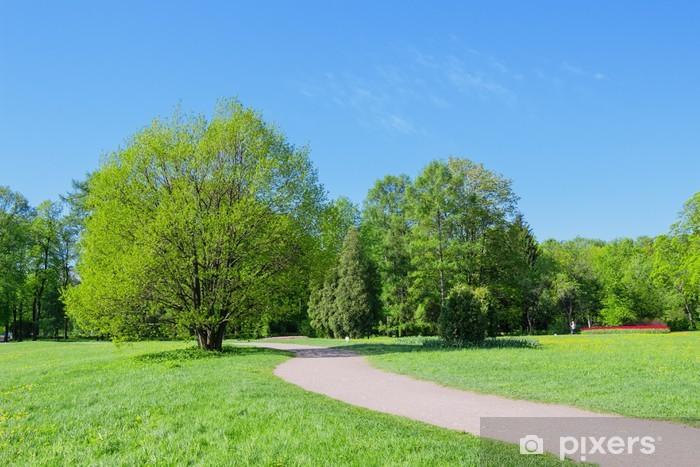 Papier peint vinyle Chemin et des arbres dans le parc au printemps - Asie