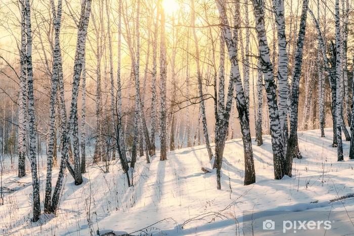 Vinyl Fotobehang Zonsondergang in een bos in de winter - Thema's