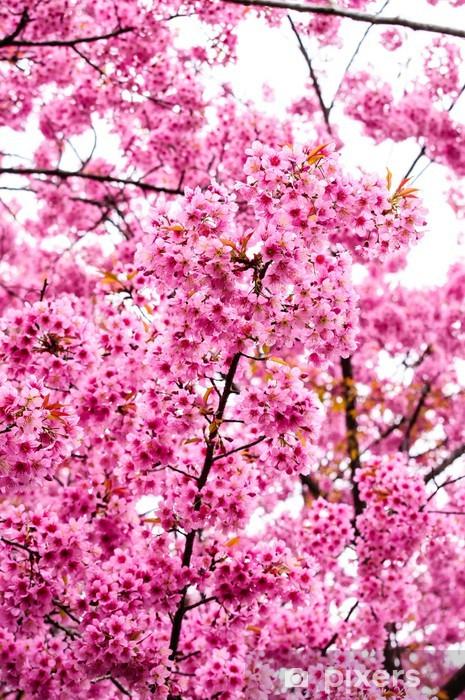 Naklejka Pixerstick Kwiaty wiśni kwiaty tygrysa lub kwiaty w Tajlandii kwitnienia - Lasy