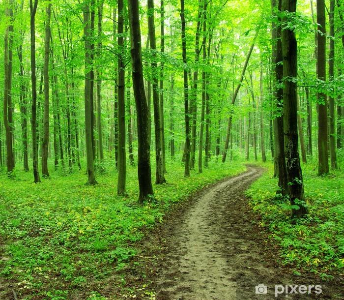 Vinyl-Fototapete Grüner Wald - Naturwunder