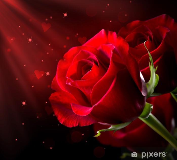 Papier peint Rose rouge isolé sur le noir. Saint-Valentin • Pixers ...