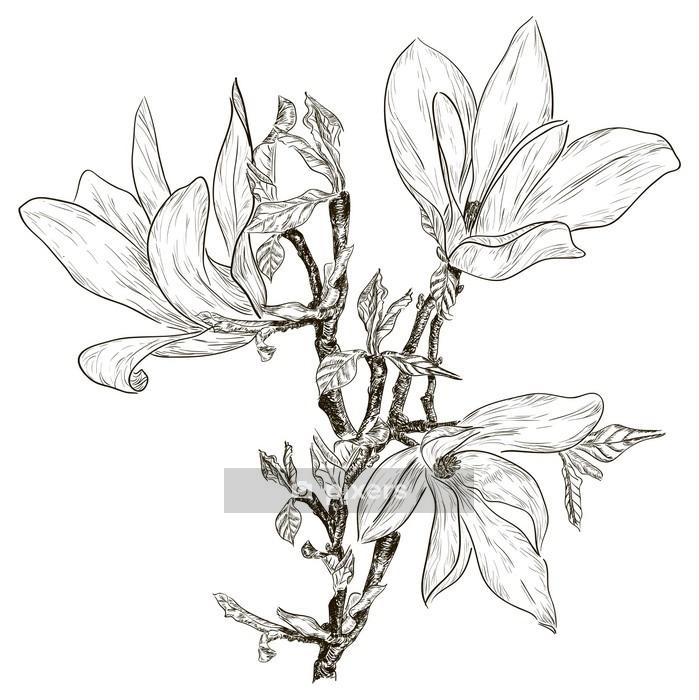 Sticker Mural Dessin à La Main Des Fleurs De Magnolia Printemps