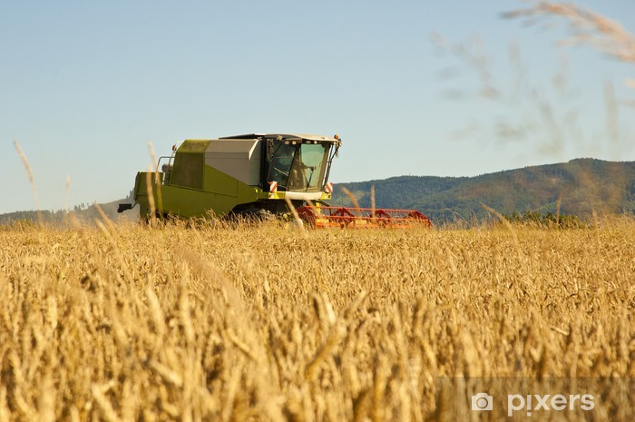 Vinilo Pixerstick Máquina segadora en el trabajo de la cosecha de un campo de trigo. - Agricultura