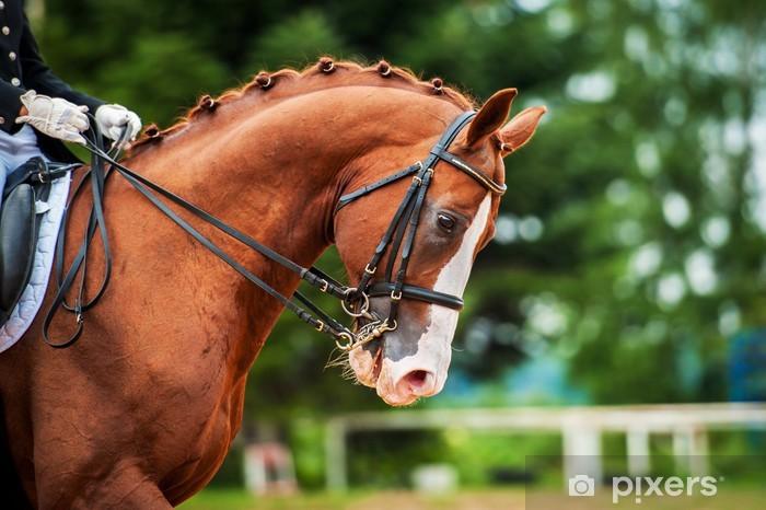 Sticker Pixerstick Portrait de cheval rouge dans la compétition de dressage - Sports individuels