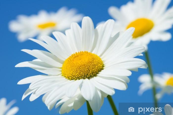 Vinil Duvar Resmi Gökyüzü bir arka plan üzerinde güzel papatyalar - Çiçekler
