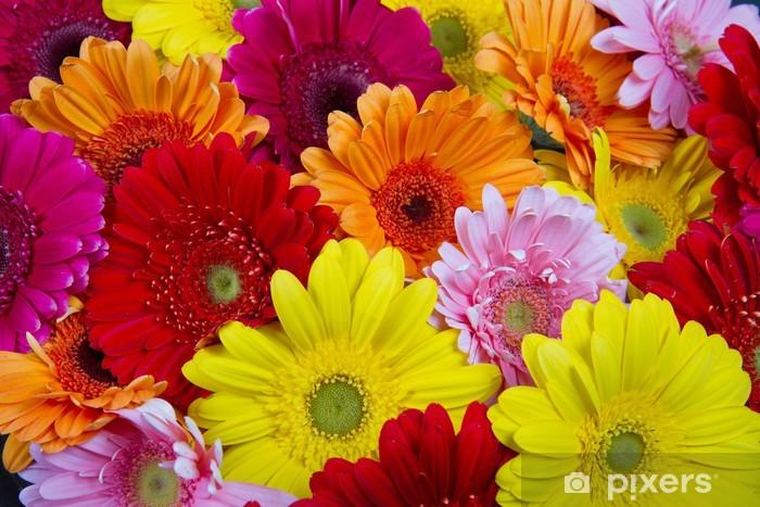 Naklejka Pixerstick Kolorowe gerbery - Kwiaty