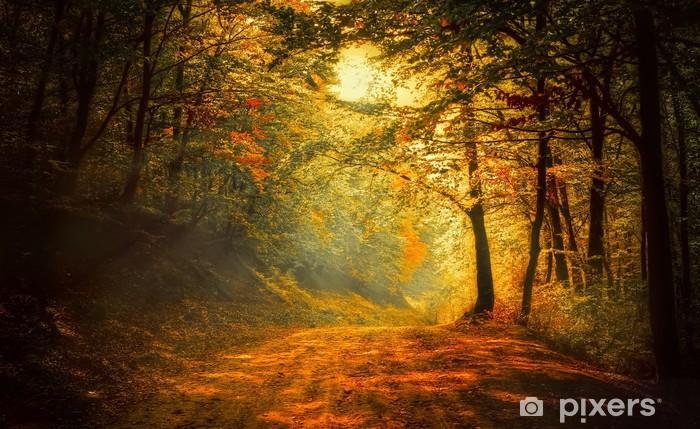 Zelfklevend Fotobehang Herfst in het bos - Thema's