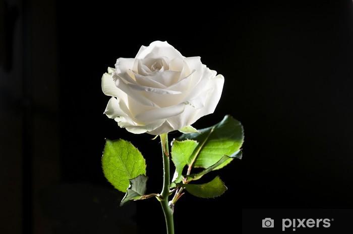 Carta Da Parati Rosa Bianca : Carta da parati rosa bianca u2022 pixers® viviamo per il cambiamento