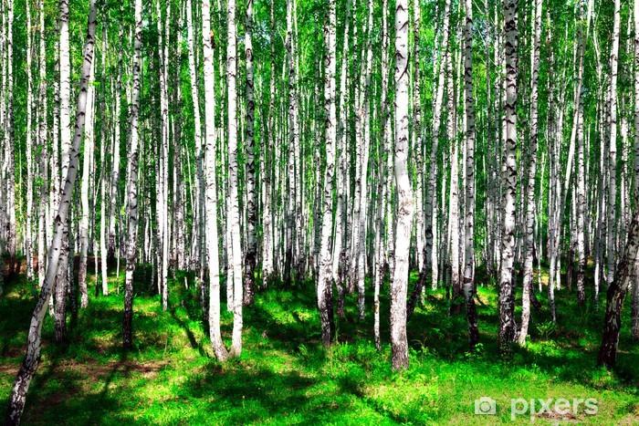 Fototapeta winylowa Brzozowy las lato - Tematy