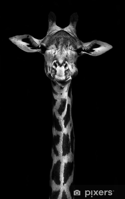 Giraffe in Black and White Washable Wall Mural -
