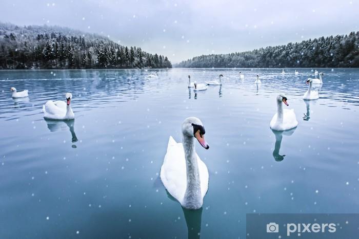 Pixerstick Sticker Zwanen zwemmen in het meer op een besneeuwde winterse dag - Zwanen