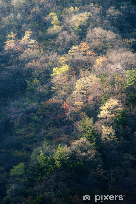 Vinyl-Fototapete Spring Hill の Tamba - Jahreszeiten