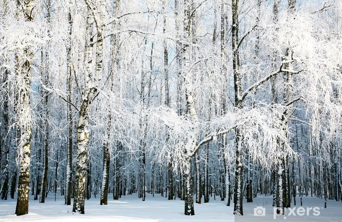 Papier Peint Foret De Bouleau Avec Des Branches Couvertes De Neige