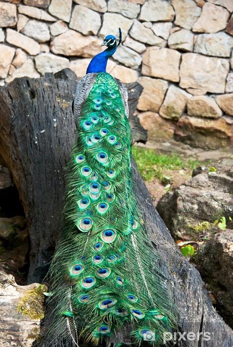Fototapeta winylowa Paw na pniu drzewa - Ptaki