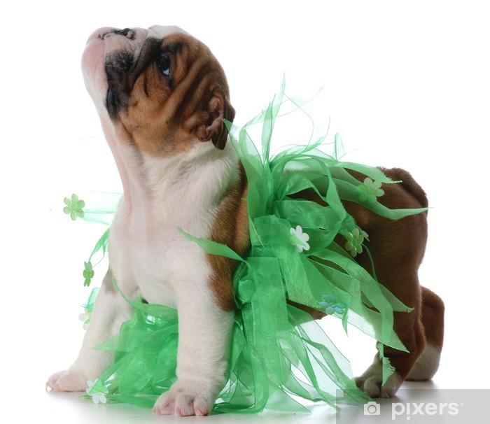 Plakat Kobiece puppy - Ssaki
