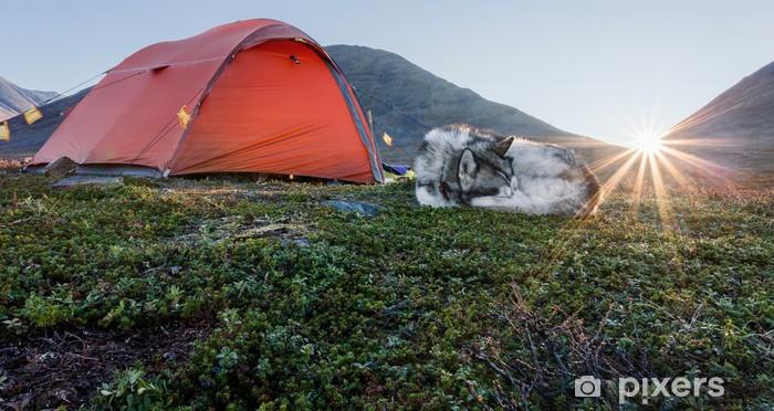 Fototapeta winylowa Wschód słońca z namiotem i psem w Szwecji - Ssaki