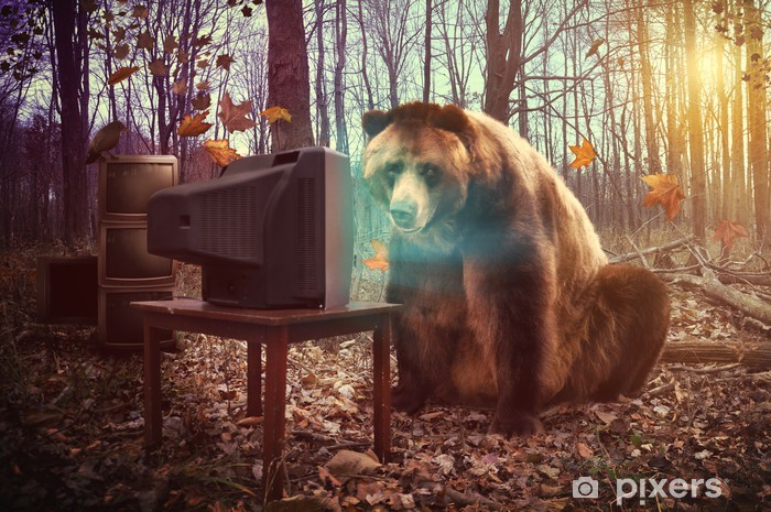 Lonely Bear Watching Television in Woods Pixerstick Sticker - Themes