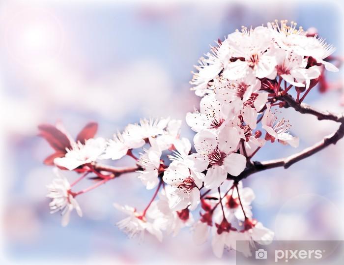 Papier peint vinyle La floraison des arbres au printemps - Pommiers