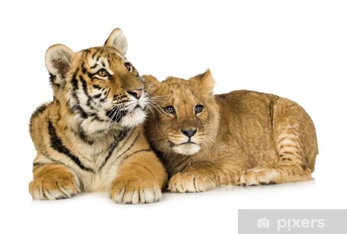 Naklejka Pixerstick Lion Cub (5 miesięcy) i tiger cub (5 miesięcy) - Naklejki na ścianę