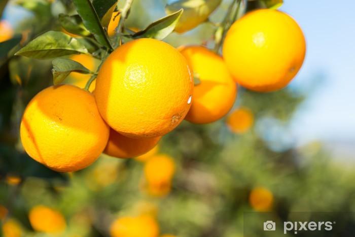 Papier peint vinyle Valence orangers - Fruits