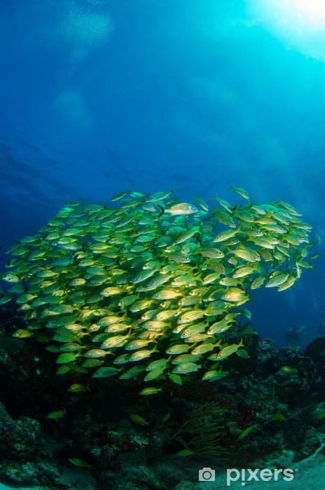Naklejka Pixerstick Pomruków i Lucjan z Morzu Karaibskim - Zwierzęta żyjące pod wodą