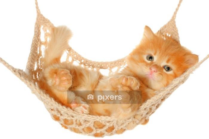 Muursticker Leuke roodharige kitten liggen in de hangmat. - Vakantie