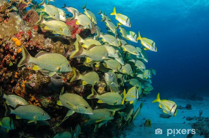 Naklejka Pixerstick Pomruków i snappers, Morze Karaibskie - Zwierzęta żyjące pod wodą