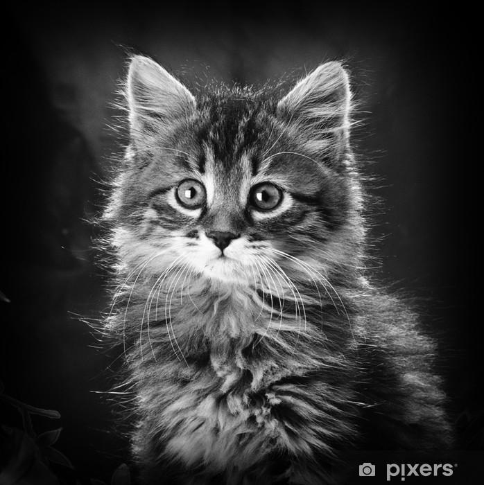 Fototapeta winylowa Kot - Tematy