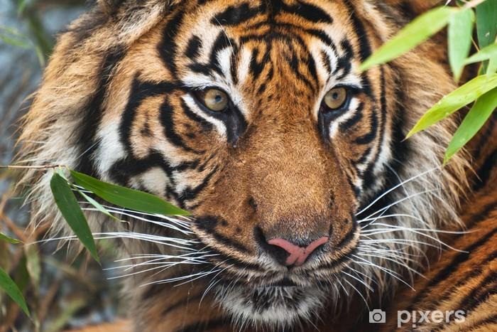 Fototapeta winylowa Tygrys - Tematy