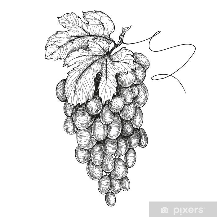Plakat Ręcznie rysowane ilustracje winogron - Owoce
