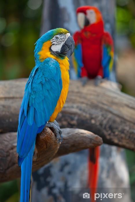 Nálepka Pixerstick Scarlet macaws - Papoušci