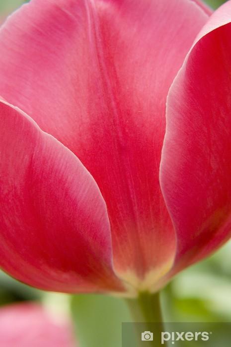 Vinyl-Fototapete Red tulip - Landwirtschaft
