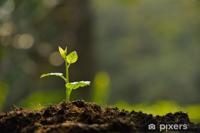 Fotomural Estándar Planta joven en la luz de la mañana - Vida