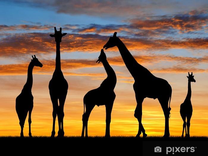 Fototapeta winylowa Stado żyraf w zachodzie słońca - Tematy