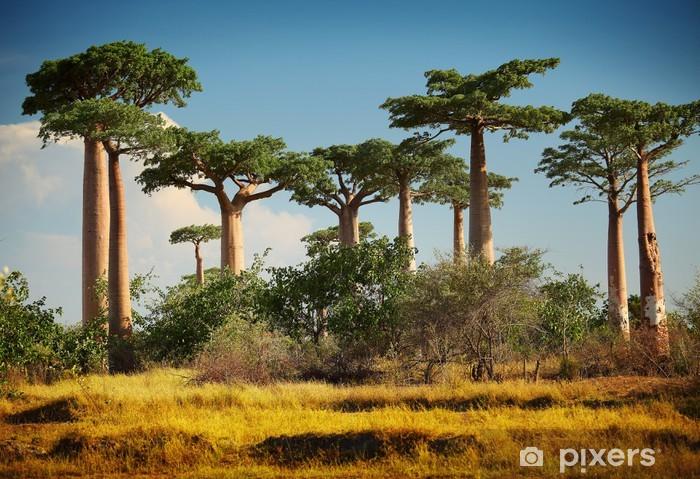 Sticker Pixerstick Baobab - Thèmes