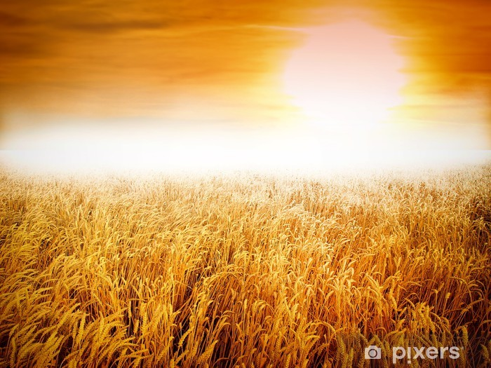 Fototapeta winylowa Żółta łąka pod błękitne niebo z chmurami - Nasiona
