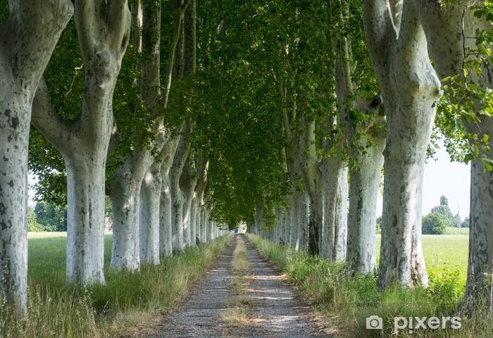 Vinyl-Fototapete Landstraße in der Provence - Bäume